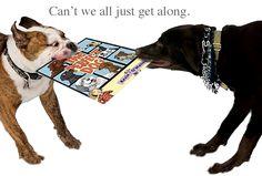 Boston Terrier, Dogs, Animals, Art, Art Background, Boston Terriers, Animales, Animaux, Pet Dogs