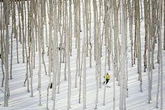 Photo: Alexa Miller | Tight trees at Deer Valley, Utah