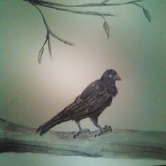 Tonight's #sketch was done almost entirely with the #artgraf #watercolor #graphite to do this #raven on a #deadtree  #art #artistic #artoftheday #drawing #drawingaday #sketchbook #sketchaday