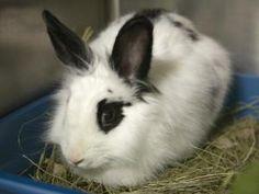 BARBIE is an adoptable Bunny Rabbit Rabbit in Boston, MA.