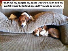 I could not live without my beagle...