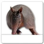 Armadillo Build Your Own Ecards | Sloppy Kiss Cards