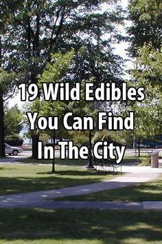 Most people think of eating plants in the wilderness, but there are also many wild edibles in the city. Here are 19 that are easy to find.
