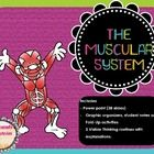 Engage your students and involve them into learn about the Muscular System.   Here you win find:  -38 slide PowerPoint: Functions of the Muscular System, facts, types of muscles, structure of a muscle and how to look after the muscular system. Every part finishes with H.O.T.S. questions (High Order Thinking Skills).  - A PDF file with student pages:  - Graphic Organizers  - Students notes  - Fold-up activities