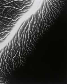 "Image from ""Lightning Fields,"" n series of photographs by Hiroshi Sugimoto. Each image is a unique document of an electrical current. Hiroshi Sugimoto uses a 400,000-volt Van De Graaff generator to apply an electrical charge directly onto his film.    © Hiroshi Sugimoto. Lightning Fields 128, 2009"