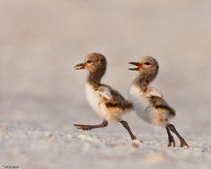40 Baby Animals To Celebrate World Wildlife Day
