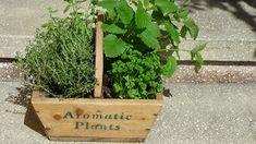 Doctor Natura: Despre rolul plantelor condimentare in alimentatia...