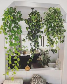 pothos, philodendron brasil To decorate with real plants means to create a li. Room With Plants, House Plants Decor, Plant Decor, Ivy Plant Indoor, Indoor Garden, Ivy Plants, Real Plants, Large Flower Pots, Pothos Plant