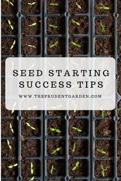 Gardening Tips Starting seeds in your garden is an attractive and cheaper option to grow your favorite plants but to do this successfully you'll need to learn some seed starting tips!