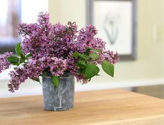 Flowers to Plant:Lilac