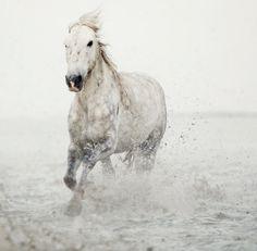 Equestrian Links