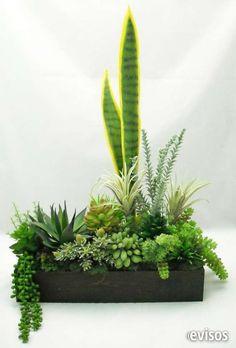 Cactus, suculentas, plantas, arreglos, vivero 66715231