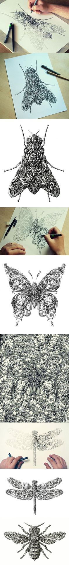 Awesome renaissance-style insect drawings