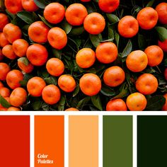 bright orange color, choice of color in the interior, dark green color, green color, green shades, olive color, orange color, red color, tangerine color.