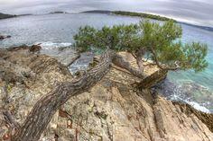 Maslinica, island Šolta