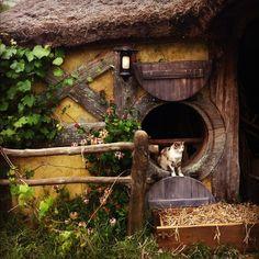 Hobbit house, Kitty door