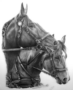 Horses, pencil drawing.
