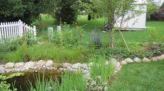 Residential Rain Garden and Pond Prairie Garden, Wayne County, Rain Garden, Sustainability, Landscape, Outdoor Decor, Green, Year 2, Plants