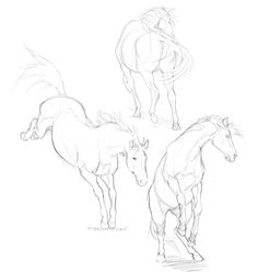 horse sketches on louise's computer & supertablet ahh