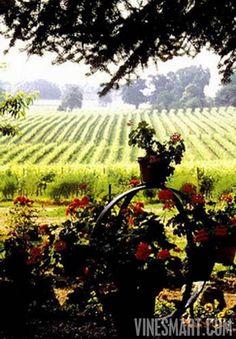 Armagnac Vineyards in in Gascony, France