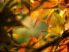 """""""Autumn"""" by Edwin Alverio won 2nd place in First Autumn Photo Contest."""