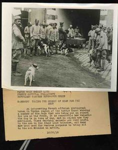 Dogs being counted in a WWI census. Dogs were a valuable aid in the war for both the mental and physical assistance of the soldiers. This photo shows some front line dogs being counted in a census in Verdun, France in Military Working Dogs, Military Dogs, Pitbull, The Great, War Dogs, Science Books, Thats The Way, Service Dogs, World War I