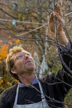Hopefully ours will survive long enough for these tips to come in handy. :) One season down. Pruning Shrubs, Tree Pruning, Garden Trees, Trees To Plant, Bonsai Trees, Outdoor Plants, Outdoor Gardens, Pruning Japanese Maples, Japan Garden