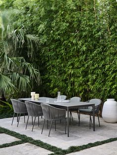 Outdoor Chairs, Outdoor Furniture Sets, Outdoor Decor, Outdoor Spaces, Tropical Garden, Tropical Plants, Dwarf Mondo Grass, Landscape Design, Courtyards