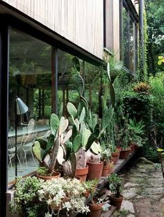 cacti collection
