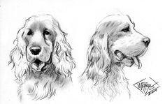DeviantArt: More Like Cocker Spaniel dogs by MatiasSoto