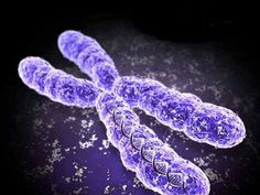 ChromosomesYou've heard of Downs syndrome and Fragile X syndrome, but what about Jacobsen syndrome? Or22q11.2 deletion syndrome?In this post we bring attention to some lesser known chromosomal disorders.