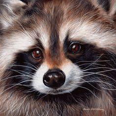 Wildlife paintings, wildlife drawings and pet portraits. Wildlife Paintings, Wildlife Art, Animal Paintings, Oil Paintings, Raccoon Art, Cute Raccoon, Vida Animal, Mundo Animal, Amazing Animals