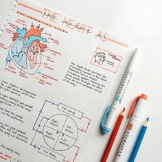 The heart is probably one of my favourite topics in biology – what's yours? – … The heart is probably one of my favourite topics in biology – what's yours? Nursing School Notes, College Notes, Medical School, School Organization Notes, Study Organization, Study Biology, Biology Lessons, Science Notes, Chemistry Notes