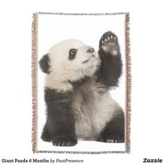 Giant Panda 6 Months Throw Blanket Photo Memories, Throw Blankets, Panda Bear, Party Hats, Are You The One, 6 Months, Family Photos, Animals, Family Pictures