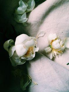 Peonies. Photo by Andrea Gentl