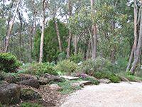 Garden leading into the bush Garden leading into the bush Australian Garden Design, Australian Native Garden, Australian Bush, Bush Garden, Dry Garden, Acreage Landscaping, Landscaping Ideas, Cottage Garden Design, Garden Spaces
