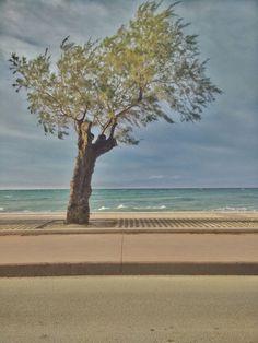 #xylokastro #waves #wind #Parnassus