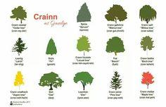 Trees in Gaelic Gaelic Words, Irish Language, Cedar Trees, Luck Of The Irish, Celtic, Doodles, Learning, Nature, Gaelic Irish