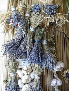 Lavender and Garlic Drying ~ Provence ~ France Lavender Cottage, Lavender Garden, Lavender Scent, Lavender Blue, Lavender Fields, Lavender Flowers, Dried Flowers, Drying Lavender, Lavander
