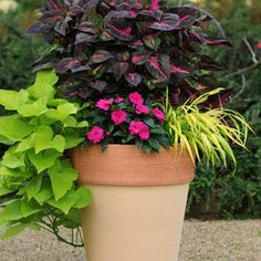 More than the other two elements of a well-designed mixed container, the thriller and filler, the spiller gives a lush look to your finished planter.