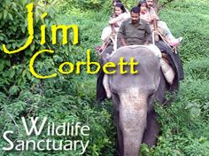 Enjoy the Wild Nature at ★JIM CORBETT NATIONAL PARK★. Away from the city crowd and noise, with the beautiful and peaceful jungle environment. This unique reserve is known worldwide for the wide range of flora and fauna that is offers to the visitors.