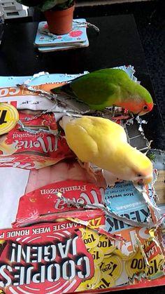 Lovebirds shredding paper for the baby birds Snack Recipes, Snacks, Love Birds, Nest, Chips, Paper, Baby, Food, Snack Mix Recipes