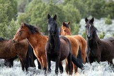 Google Image Result for http://www.diamondpphotography.com/wild-mustang-pictures/wild-mustang-pictures.jpg