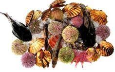 seafood Seafood, Wreaths, Halloween, Home Decor, Sea Food, Door Wreaths, Deco Mesh Wreaths, Interior Design, Halloween Stuff