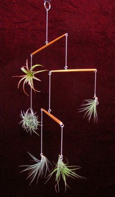 Photo: air plant mobile made from chopsticks and bathtub chain