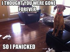 Did you come home from work only to see that your dog had ripped the stuffing out of your pillows? Or did the neighbor tell you that your dog's been disturbing the neighborhood with his howling and barking when you were gone? If you've been having issues like the ones above, then your dog most likely suffers from separation anxiety. It's a manifestation of the panic they are feeling when left alone.