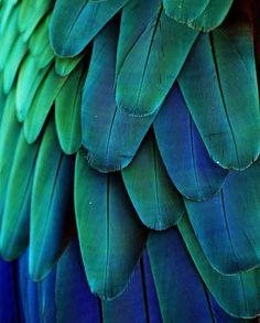 beautiful colors of Macaw Feathers. Photo by Michael Fitzsimmons.  Source: http://www.flickr.com/photos/83708008@N07/7664120406/