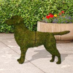 Bark bark I'm a moss dog