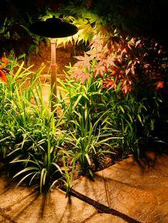Ideas On Garden Lighting; Outdoor Lighting Ideas For Bbq rather House Garden Lighting Ideas of Backyard Lighting Ideas For A Party the Exterior Lighting Ideas Nz Backyard Lighting, Outdoor Lighting, Lighting Ideas, Pathway Lighting, House Lighting, Wall Lighting, Landscape Lighting Design, Olive Garden, Outdoor Landscaping