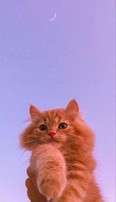 Cute Cat Wallpaper, Purple Wallpaper Iphone, Iphone Wallpaper Tumblr Aesthetic, Cute Patterns Wallpaper, Butterfly Wallpaper, Animal Wallpaper, Disney Wallpaper, Room Wallpaper, Cute Baby Cats